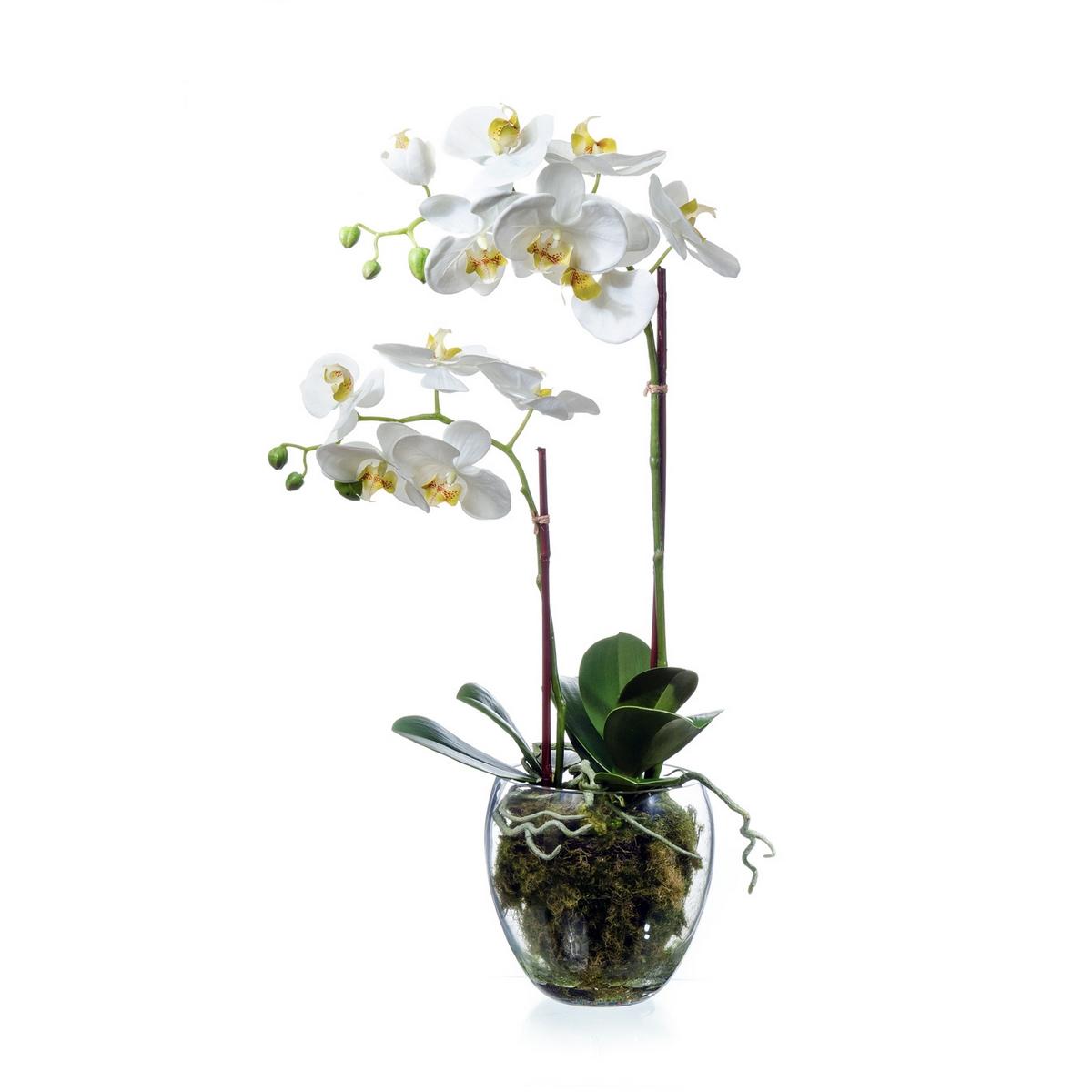 Фото на стекле ветки орхидеи
